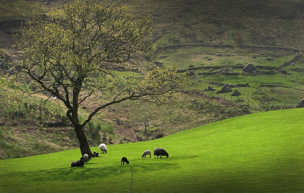 """фото """"Bible Landscape"""" метки: пейзаж, природа, домашние животные"""