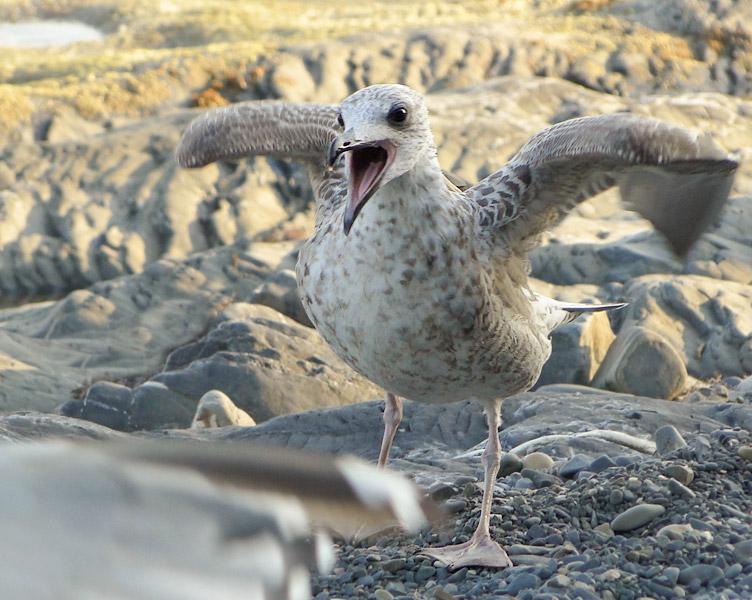 """фото """"Птеродактиль"""" метки: природа, дикие животные"""