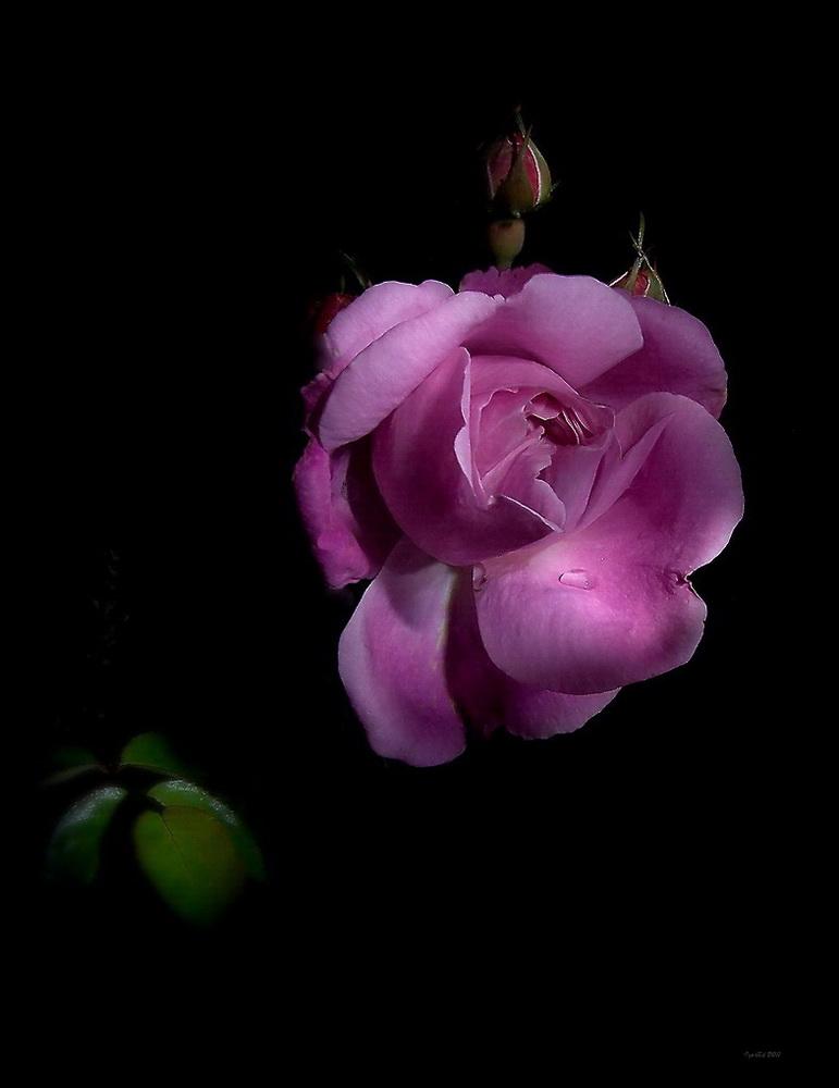 """фото """"Последние в этом году"""" метки: природа, цветы"""