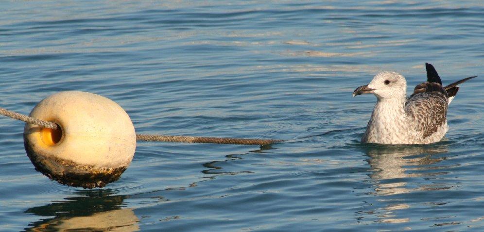 "фото ""calm waters"" метки: пейзаж, вода"