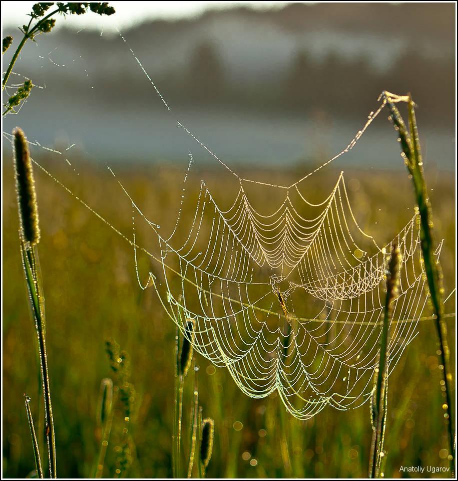 """фото """"Творение мастера (это про паука).."""" метки: природа, макро и крупный план,"""