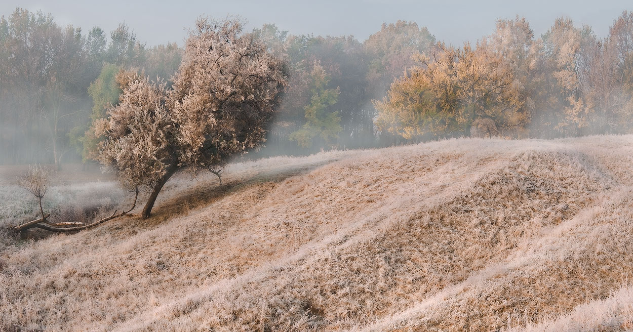 """фото """"Осенний иней-II"""" метки: пейзаж, осень"""