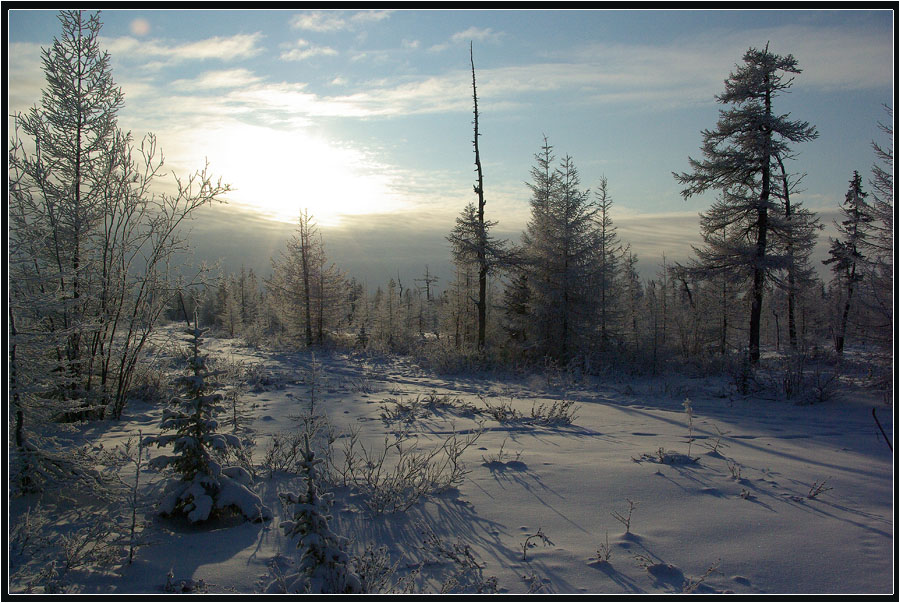"""фото """"Октябрь в Приполярье 3"""" метки: пейзаж, зима, лес"""