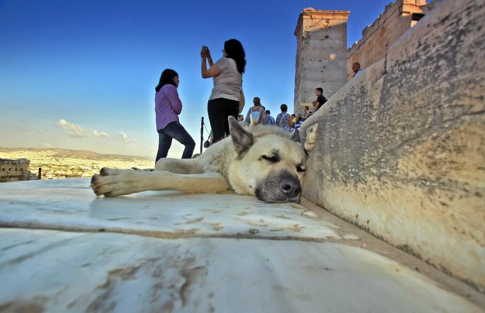 """фото """""""" Собакой клянусь"""" (с)"""" метки: природа, путешествия, Европа, домашние животные"""