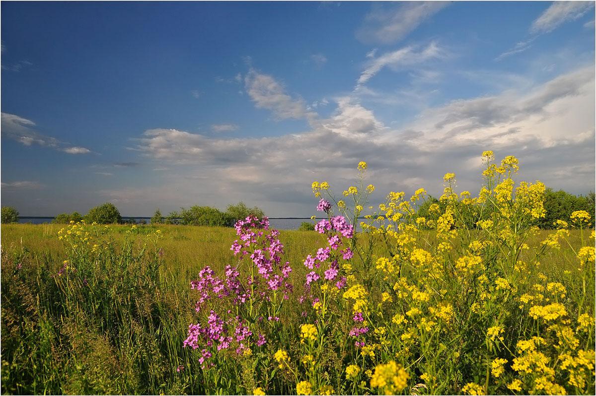 Ах лето метки пейзаж природа лето