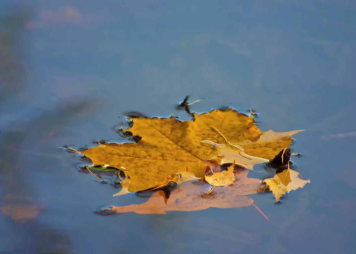 """фото """"Прощальный привет."""" метки: пейзаж, природа, вода"""
