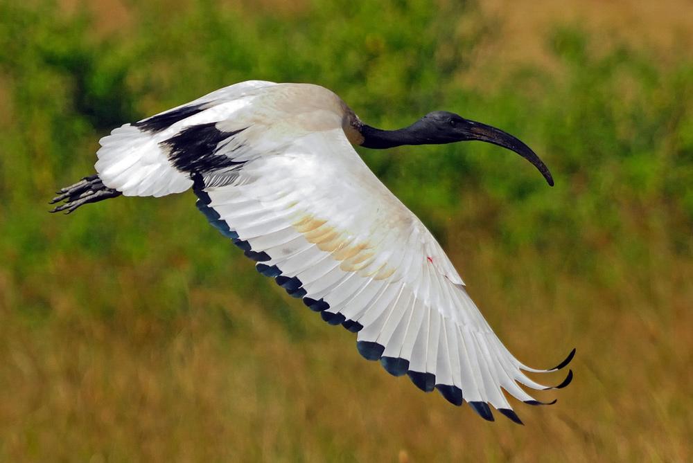 """фото """"На крыле"""" метки: природа, дикие животные"""