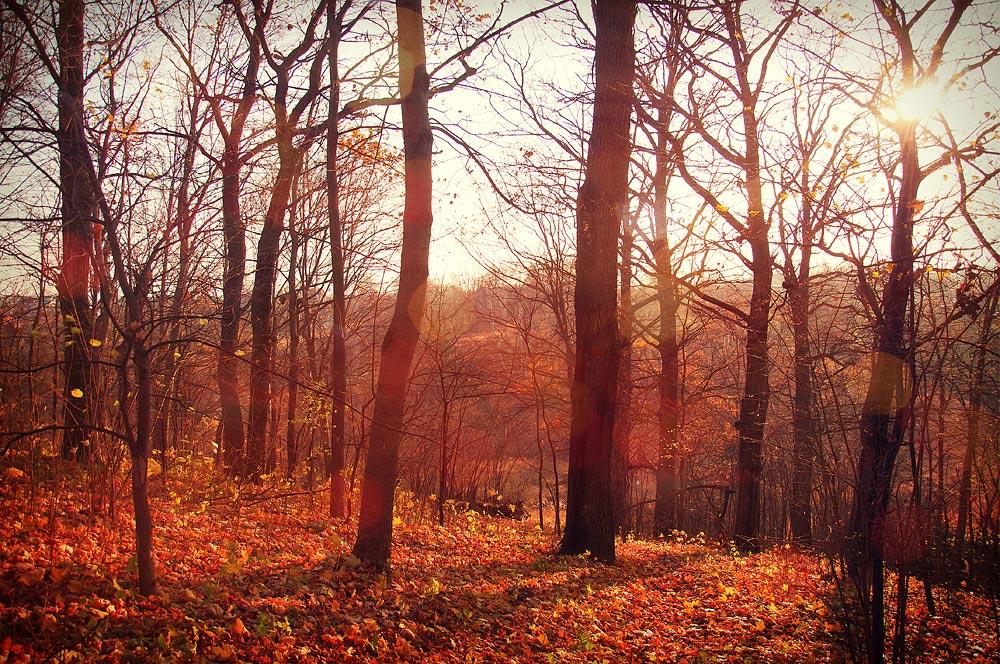 """фото """"Осень."""" метки: пейзаж, осень"""