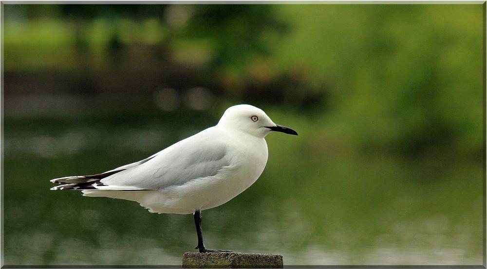 "фото ""Alone"" метки: природа, дикие животные"