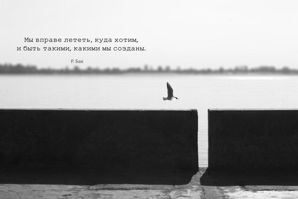 """фото """"чайка"""" метки: природа, дикие животные"""