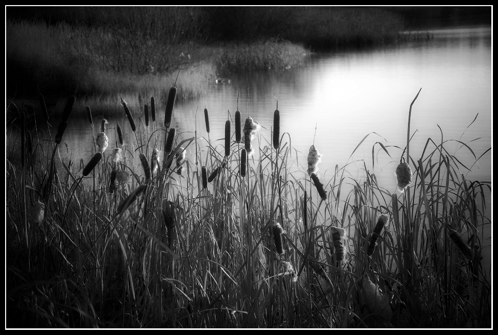 """фото """"На берегу..."""" метки: природа,"""