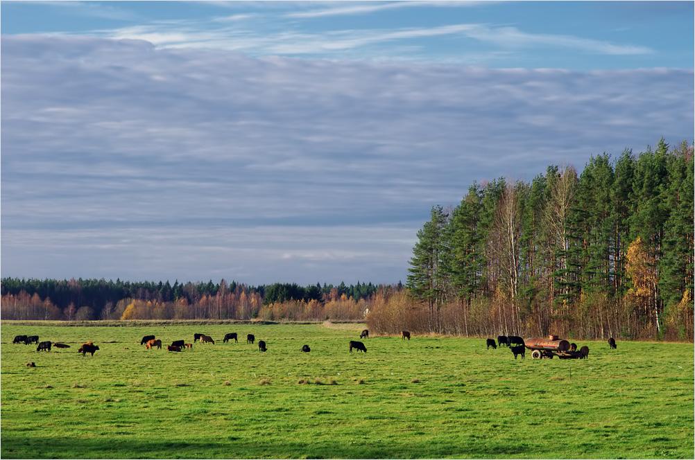 """фото """"пейзаж с коровками"""" метки: разное,"""
