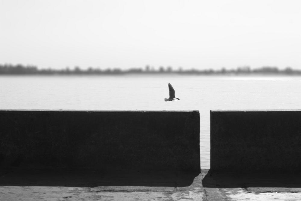 """фото """"frei"""" метки: природа, дикие животные"""