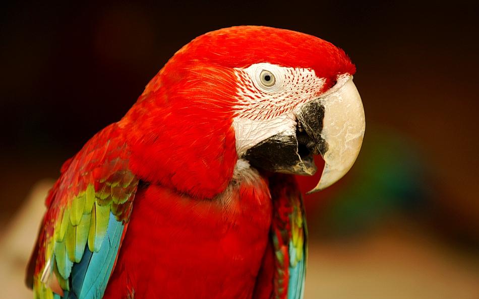 """фото """"red"""" метки: природа, путешествия, Азия, домашние животные"""