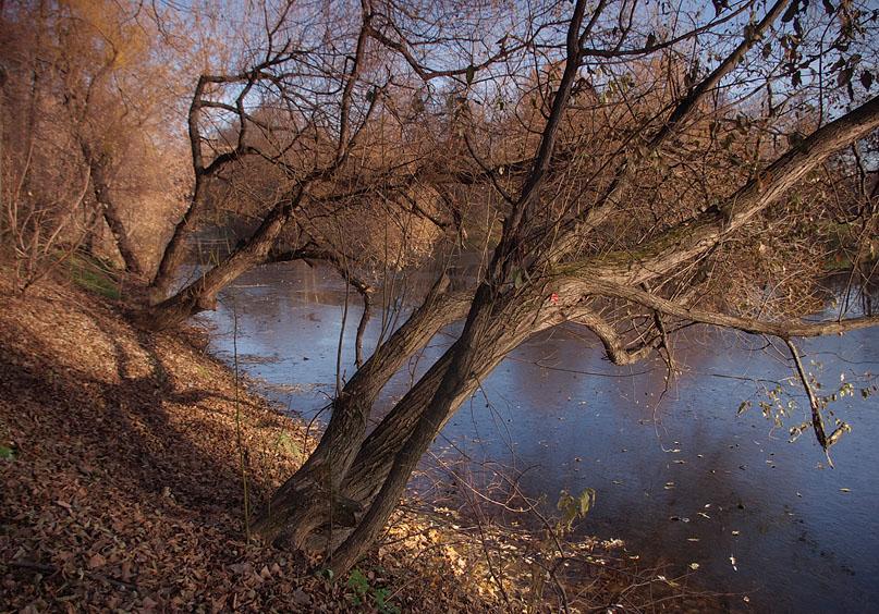 """фото """"Дерево над прудом."""" метки: пейзаж, зима, осень"""
