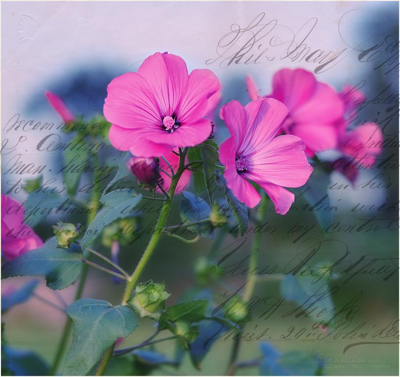"""фото """"Blume mit Texture"""" метки: макро и крупный план,"""