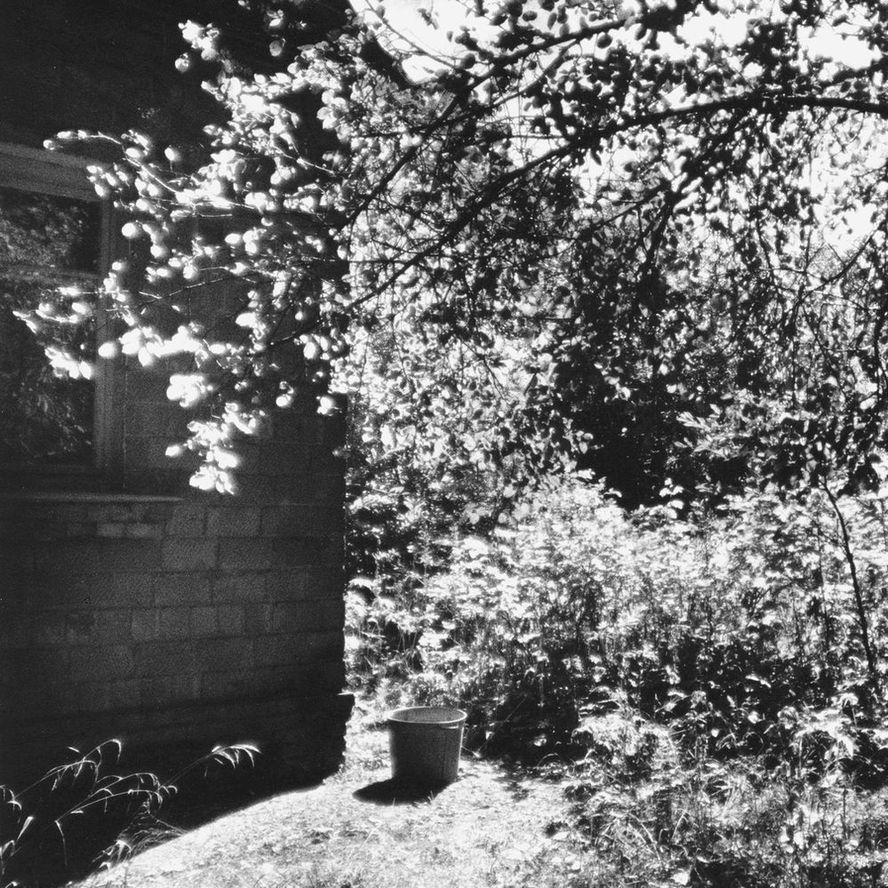 """фото """"Воспоминание о садах детства"""" метки: черно-белые,"""