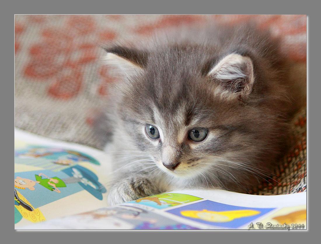"""фото """"""""Да неужели?!..."""" (Юный читатель:))"""" метки: природа, юмор, домашние животные"""