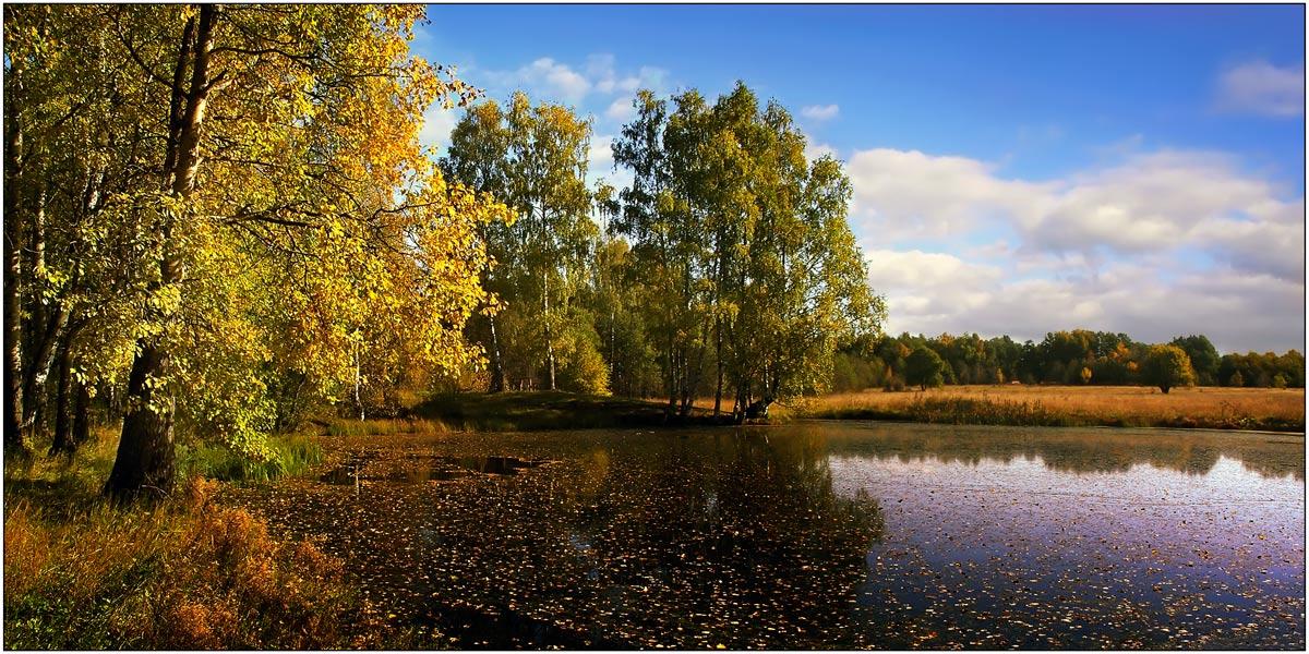 Картинка закружилась листва золотая в розоватой воде на пруду