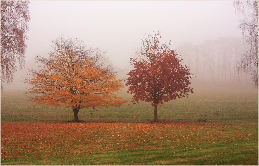 """фото """"Парочка"""" метки: пейзаж, лес, осень"""