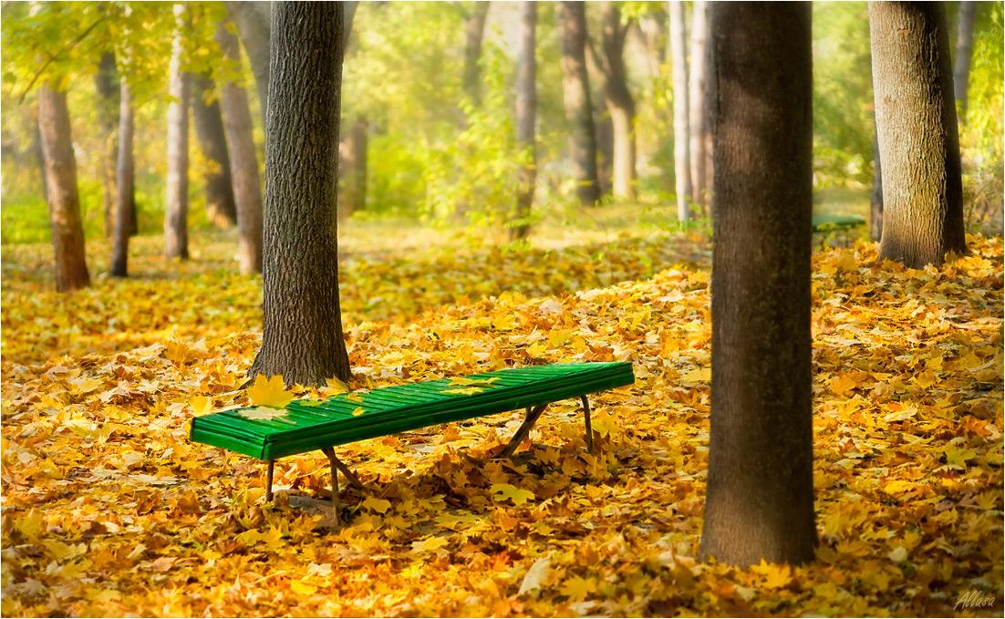 """фото """"Приглашение к осеннему размышлению или С нежной грустью об опавших листьях..."""" метки: пейзаж, фрагмент, осень"""