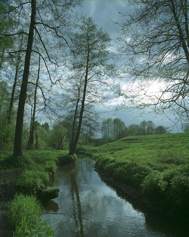 """фото """"Весенние лужки"""" метки: пейзаж,"""