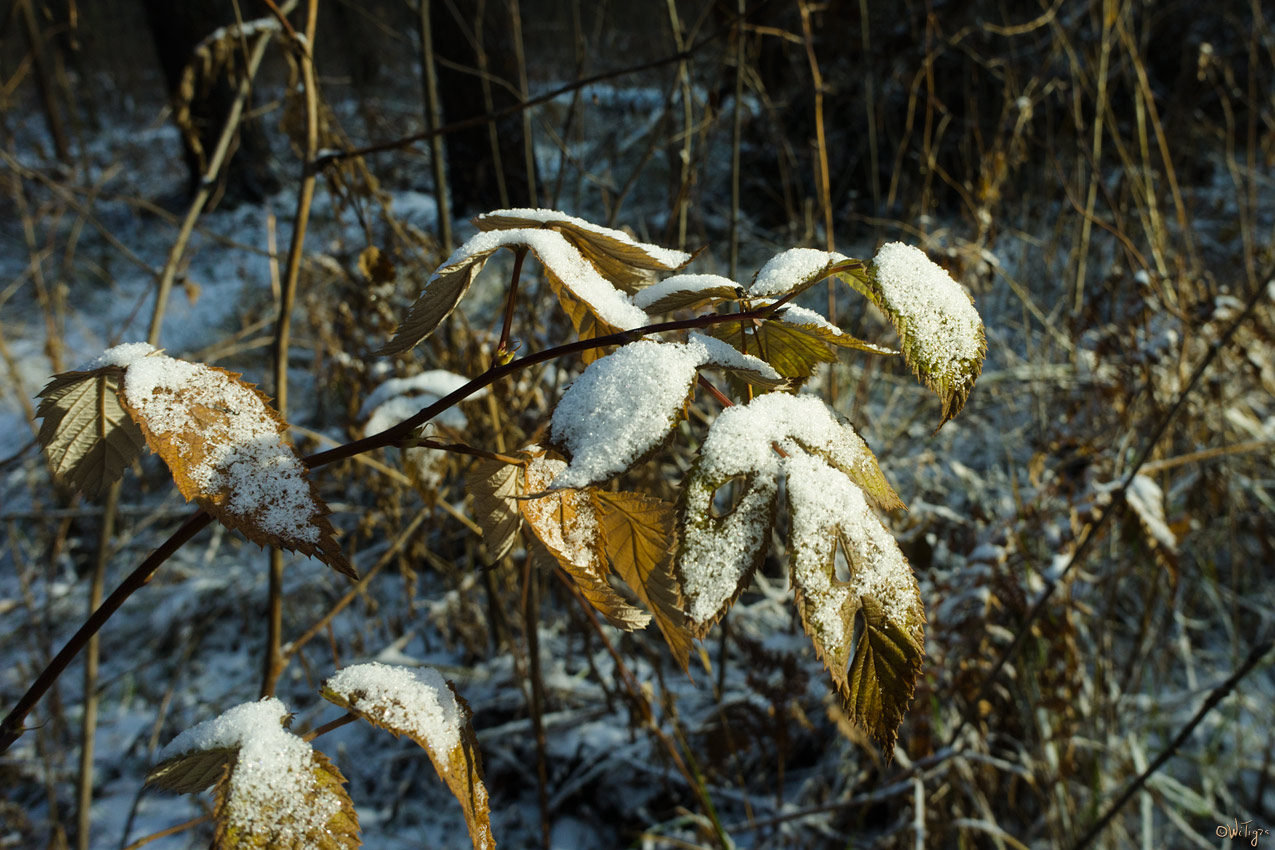 "фото ""Мороз и солнце ..."" метки: природа, пейзаж, зима, цветы"