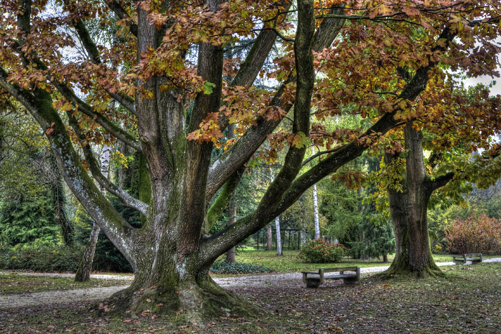 "фото ""Autumn in the park"" метки: пейзаж, лес"
