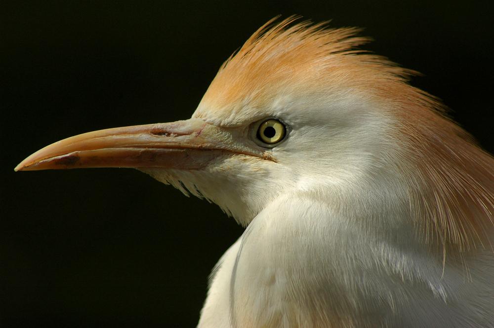 """фото """"Анфас"""" метки: природа, дикие животные"""