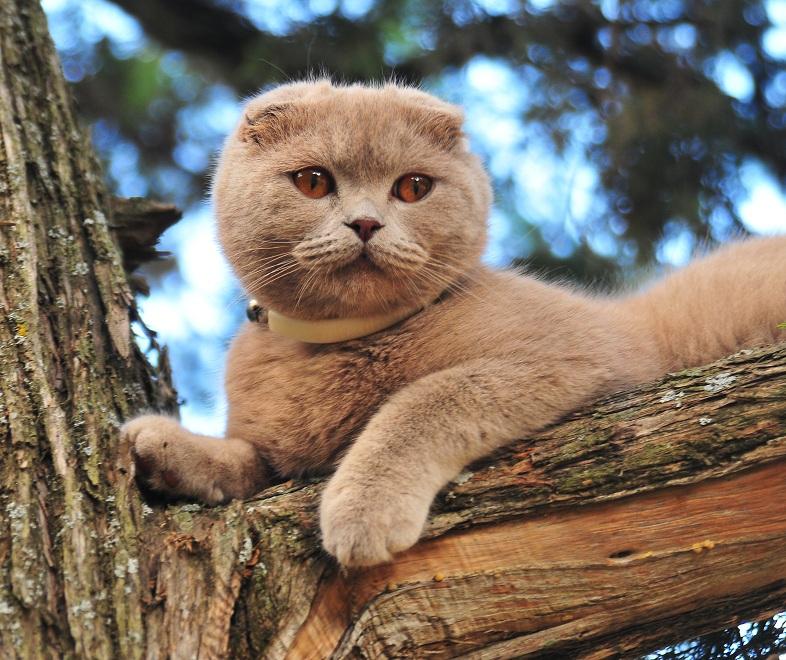 """фото """"Котяра."""" метки: природа, домашние животные"""