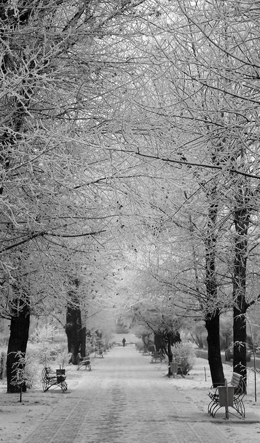 "фото ""первый снег"" метки: пейзаж, зима"