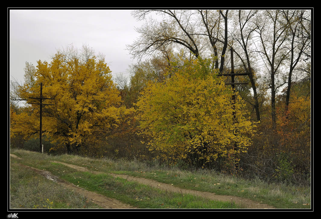 """фото """"Gold autumn"""" метки: пейзаж, осень"""