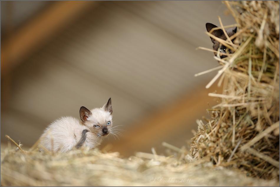 """фото """"Под присмотром"""" метки: природа, домашние животные"""