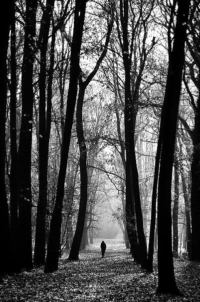 """фото """"Уединённость"""" метки: пейзаж, черно-белые, лес"""