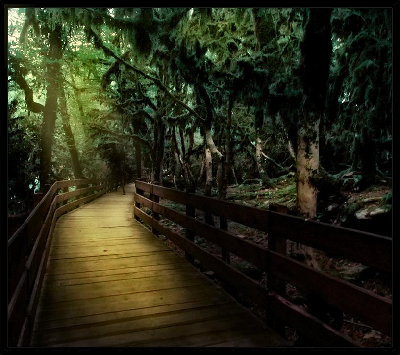 "фото ""Мост через самшитовый  лес врайоне каньона Псахо."" метки: пейзаж, лес"