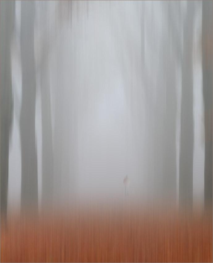"фото ""Misty Autumnmorning"" метки: пейзаж,"