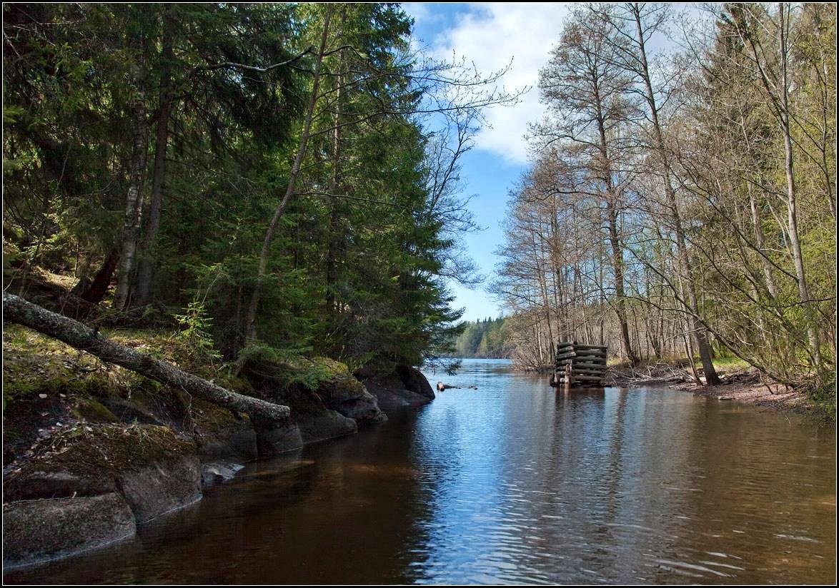 "фото ""по протокам Валаама"" метки: пейзаж, вода, лес"