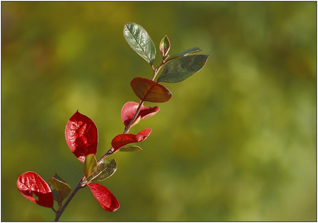 """фото """"Осенний маникюр..."""" метки: природа, цветы"""
