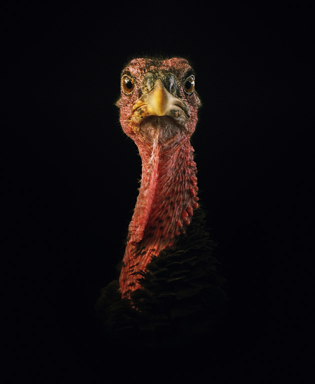 """фото """"El Caballero"""" метки: портрет, природа, домашние животные"""
