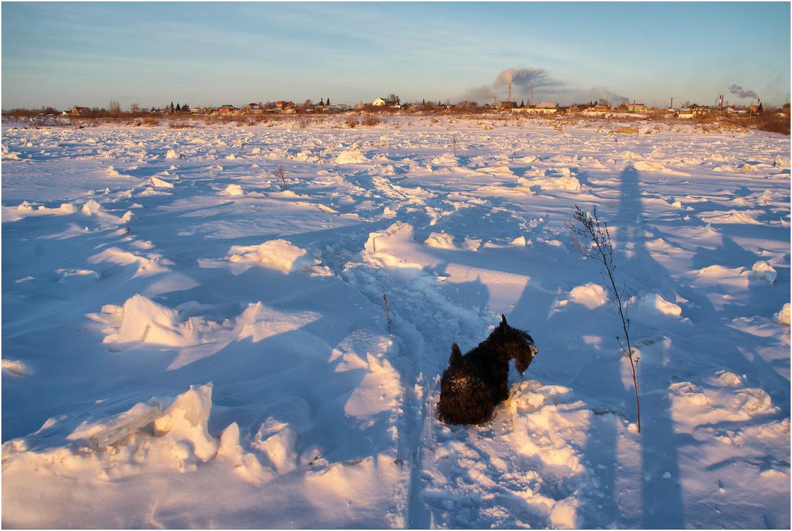 """фото """"Правильно идем?"""" метки: пейзаж, природа, домашние животные, зима"""