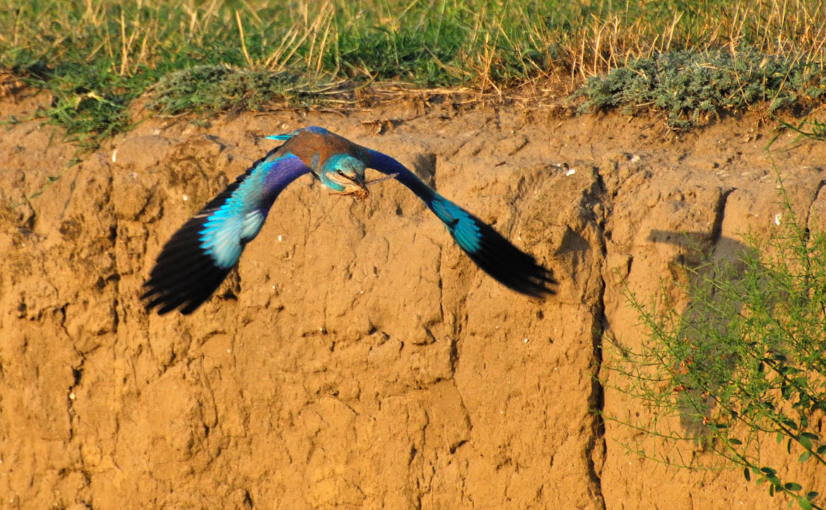 """фото """"Последний полет саранчи"""" метки: природа, дикие животные"""