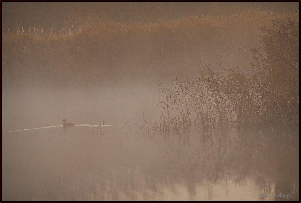 "фото ""lonely duck"" метки: пейзаж, вода, осень"