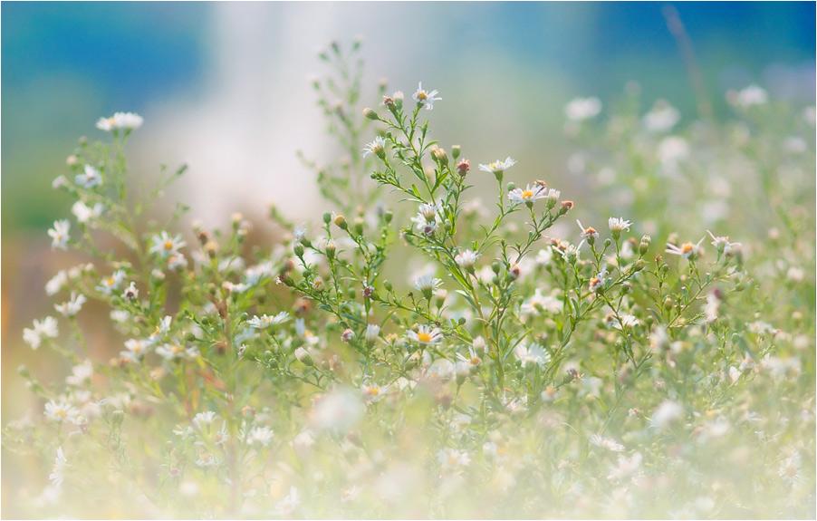 """фото """"Сон о тепле, о лете...."""" метки: природа, цветы"""