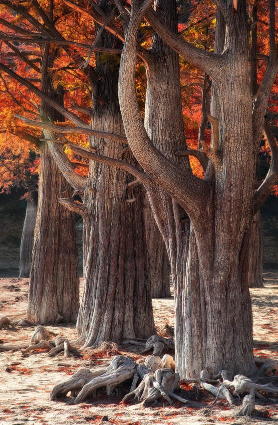 """фото """"В  осеннем наряде"""" метки: пейзаж, осень"""