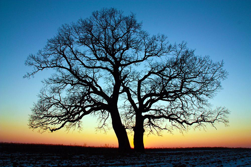 "фото ""Awaiting night"" метки: пейзаж, дерево, закат, зима, поле"