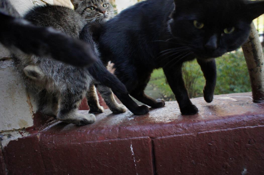 """фото """"***"""" метки: природа, домашние животные"""