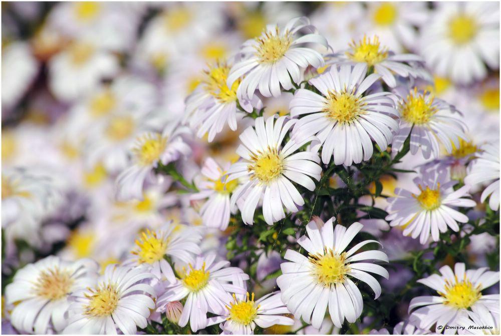 """фото """"Полянка"""" метки: макро и крупный план, природа, цветы"""