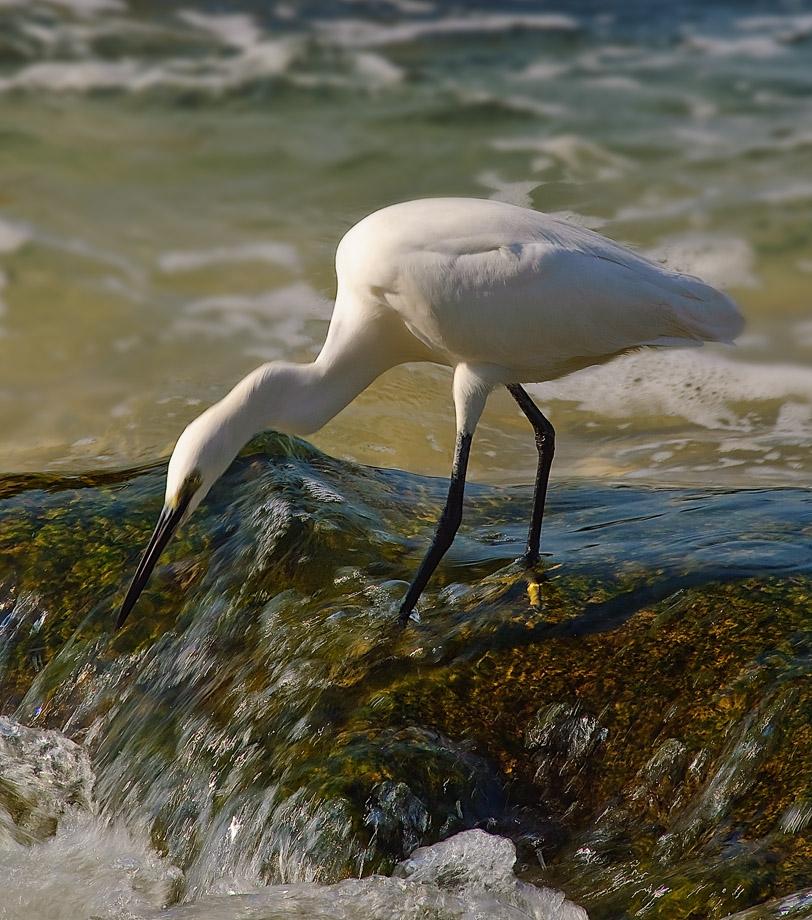 """фото """"На рыбалке"""" метки: природа, дикие животные"""