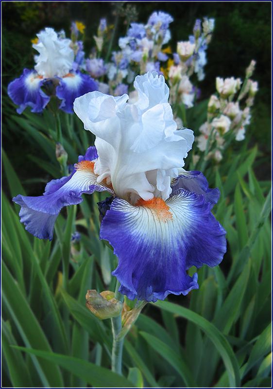 "фото ""для Chandru Shahani"" метки: природа, цветы"