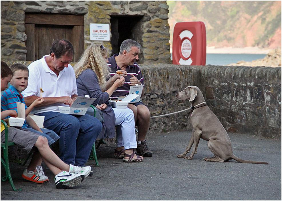 """фото """"- Ты уже обедал!"""" метки: репортаж, юмор, люди, собака"""